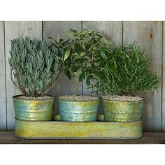 Petit Rosemary plant, olive tree and lavender plant. So beautiful!