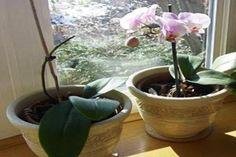 Használd te is ezt a szuper trükköt! Indoor Garden, Houseplants, Orchids, Planter Pots, Minden, Gardening, Flowers, Garten, Lilies