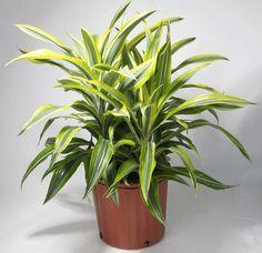 Interior Design, Plants, Nest Design, Home Interior Design, Interior Architecture, Plant, Interior Decorating, Planting, Planets