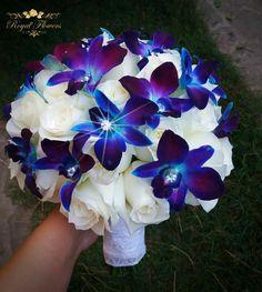 Dendrobium galaxy Blue orchid