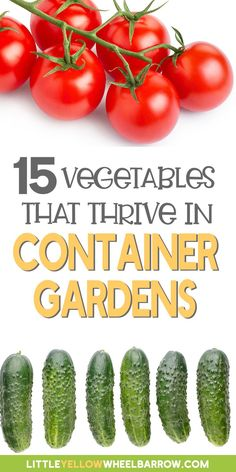 Growing fresh vegetables in pots and containers  is an easy and inexpensive way to grow your own produce without requiring a whole lot of space. No need to worry about limited space either because there are so many vegetables suited to grow in small spaces.  Take a look at this list of 15 vegetables that thrive in containers and start growing your own healthy organic vegetables right on your own deck or patio! Growing Vegetables In Containers, Easy Vegetables To Grow, Container Gardening Vegetables, Organic Vegetables, Vegetable Garden, Small Space Gardening, Gardening Tips, Cool Diy Projects, Outdoor Projects