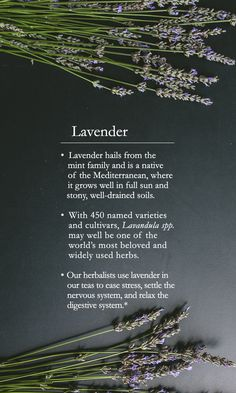With 450 named varieties and cultivars, lavender may well be one of the world's most beloved and widely used herbs. Get the 101 on what makes this herb so special.