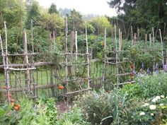 Weathered tree branch tomato cages add character to a practical vegetable garden.  These have so much more character than the metal cages.