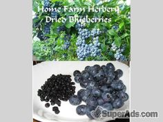 Dried Blueberries, Order now, FREE shipping in Kentucky KY - Free Kentucky SuperAds