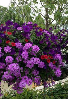 Top Super Hanging Flower Basket Ideas – Growing Lavender Gardening - Growing Plants at Home Hanging Flower Baskets, Flower Planters, Hanging Plants, Flower Pots, Potted Plants, Container Flowers, Container Plants, Container Gardening, Succulent Containers