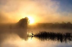 Foggy Early morning by Robert Huneault