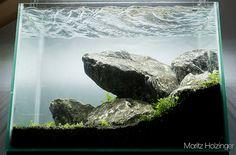 éclairage en aquascaping Aquarium Nano, Aquarium Set, Betta Tank, Fish Tank, Aquascaping, Patio Pond, Tank Design, Freshwater Aquarium, Terrarium