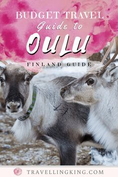 You can visit Oulu on a budget. In fact, we put together this budget travel guide to Oulu, to help you to do just that! Budget Travel, Travel Guide, Finland Travel, Island Park, Europe Destinations, Plan Your Trip, Australia Travel, Family Travel, Traveling By Yourself