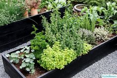 örtkryddor - Another! Outdoor Balcony, Outdoor Gardens, Container Gardening Vegetables, Vegetable Garden, Herb Garden Design, Garden Ideas, Summer House Garden, Rainbow Garden, Backyard Plan