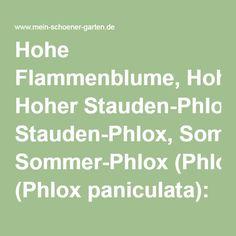 Hohe Flammenblume, Hoher Stauden-Phlox, Sommer-Phlox (Phlox paniculata): Informationen, Tipps & Tricks - Mein schöner Garten Tricks, Math Equations, Shade Perennials, Plants, Summer, Floral, Gardening, Nice Asses