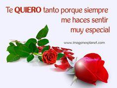 Imagenes De Rosas Con Frases Romanticas Dedicatorias Amor