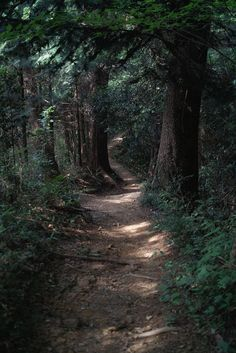 Light on a dark forest trail [unable to find primary source, link is to one comm. - Light on a dark forest trail [unable to find primary source, link is to one common source. Forest Trail, Forest Path, Dark Forest, Conifer Forest, Magical Forest, Wild Forest, Tree Forest, The Enchanted Forest, Forest Room