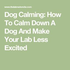 Dog Calming: How To Calm Down A Dog And Make Your Lab Less Excited