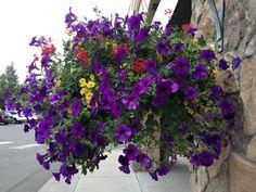 Avon flowers