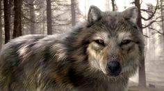 wolf pics | The wolf mesh is about 17k polygons and there are four hair systems ...