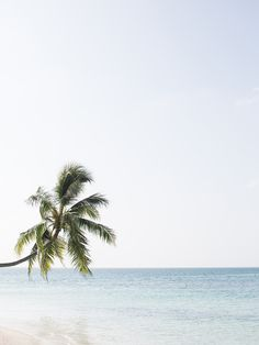 #palms #sea #blue