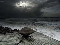 The clam before the storm  http://lolsalot.com/the-clam-before-the-storm/  #Funny #Pic