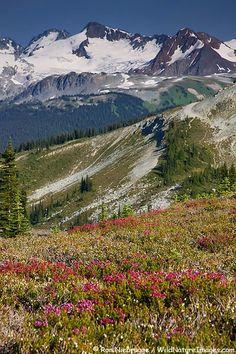 Whistler Mountain, B.C., Canada