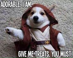 May The Force Be With You Funny Dog cute animals dogs adorable dog puppy animal pets star wars funny animals funny pets funny dogs star wars quotes War Dogs, Funny Animal Pictures, Funny Animals, Cute Animals, Fantasias Star Wars, Disfraz Star Wars, Gato Animal, Dog Breeds List, Star Wars Film