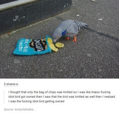 that's funny a knitted bird eating knitted chips