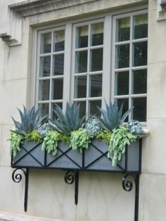 succulent window box - Yahoo Image Search Results