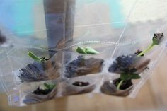 Chasing Cheerios: Planting Seeds