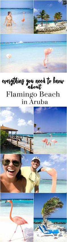 The Ultimate Travel Guide to Aruba // What to do in Aruba, where to stay in Aruba, Flamingo Beach, Flying Fishbone, Around Aruba Tours UTV