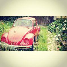 An #old #vw #käfer #vwbeetle #oldstyle #oldschool #vintage #garden #garten #car #auto #picoftheday #vienna #wien #c https://t.co/Z2xwQXWuD8 May 29 2016 at 06:43PM