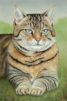 Cat Pastel Painting by Colin Bradley using Pastel Pencils. Learn to draw Animal Pictures with Colin's lessons: https://www.colinbradleyart.com/home/draw-these-animals-using-pastel-pencils/ #PastelPencils #PastelArt #ColinBradleyArt