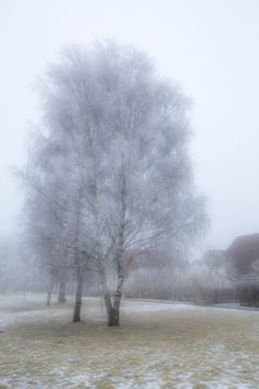 Winter trees is a photography by Jan Witthed on fotoup photo gallery.Jan Witthedis a photographer in fotoup. join and get connected to photography professionals like Jan Witthed