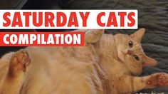 Saturday Cats Funny Pet Video Compilation 2016