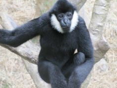 Monkey! Brookfield Zoo