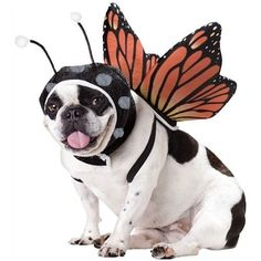Want to buy Pet Costumes? View our catalogue for Pet Costumes that offers a range of collection to choose from. Our Pet Costumes will turn the ordinary into extra-ordinary. Order your Pet Costumes at our ordinary prices from our secure network. Pet Halloween Costumes, Pet Costumes, Dog Halloween, Costume Ideas, Happy Halloween, Funny Costumes, Halloween Parties, Costume Contest, Halloween Halloween