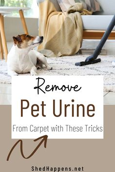 Are you looking for the solutino to remove pe turine from carpet and other surfaces effectively? I've got you covered! CLICK HERE for my tricks to remove pet odor from carpet, furniture and curtains once and for all. Being a pet owner doesn't mean that your house has to smell like pets... I have also included a DIY pet urine stain remover as well as pet enzyme cleaners that WORK! Dog Urine, Pet Odors, Cleaning Pet Urine, Carpet Odor Remover, Living With Dogs, Urine Stains, Diy Carpet Cleaner, Diy Stuffed Animals, How To Clean Carpet