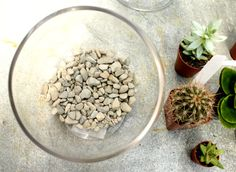 Step One: Add your base layer – this can be rocks, gravel, pebbles or course sand. This layer is for drainage, and depending on the size of your container, . Sand And Gravel, Free People Blog, Aquarium Filter, Organic Cleaning Products, Succulents In Containers, Terrarium Diy, Activated Charcoal, Craft Corner, Pots