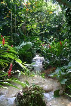 Shaw Park Botanical Gardens, Jamaica