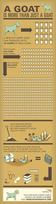 Infographic: how raising milk goats and other farm animals from the World Vision #GiftCatalog can become a sustainable means by which a child, family, and even entire community can escape poverty!