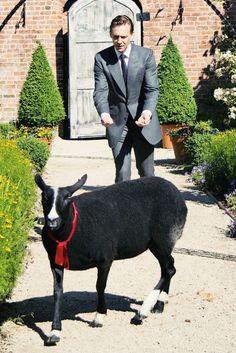 Tom Hiddleston in High Rise