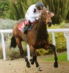 Marsha winning under Declan McDonogh at Dundalk, 9 October 2015