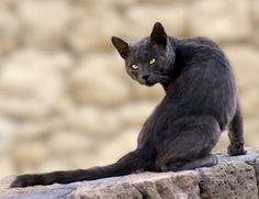 cat_d.jpg  By: lisasolonynko