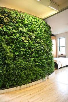 Green house! Green living wall.