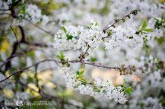 Spring time :)