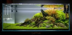 Favourites: aquascape by Nuno Matos Very nice triangular composition. More information and pictures in UKAPS forum thread here.
