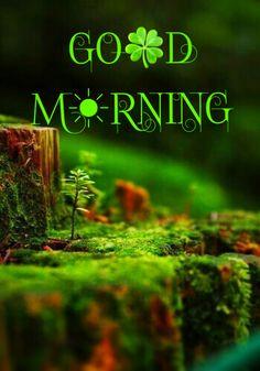 Good Morning Sunday Images, Happy Morning, Good Morning Quotes, Good Day, Krishna, Sd, Disney, Good Morning Wishes, Landscape