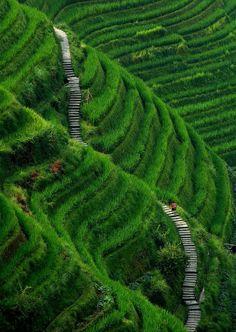 The Longsheng Rice Terraces, Guilin Guangxi, China