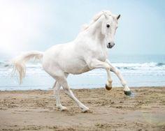 White horse on a beach