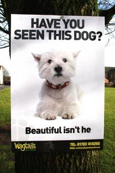 Wagtails Dog Grooming ad - looks just like my Zoe!