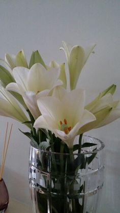 White Lillies White Lilly, Vase, Flowers, Plants, Home Decor, Homemade Home Decor, Flower Vases, Flora, Plant