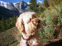 Lacey in the High Sierras...your first mountain hike.