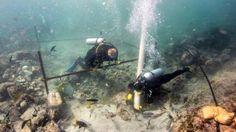 Un equipo de arqueólogos submarinos ha hallado y recuperado en las costas de Omán los restos de naufragio más antiguos de la Edad de Oro de laExploración europea, según ha anunciado el Ministeri